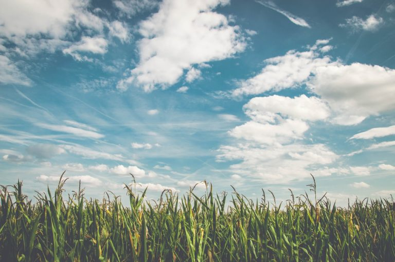 Jak wybrać odpowiednio dopasowane preparaty do ochrony roślin?